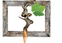 Agriumbria, incontro tecnico per contoterzisti